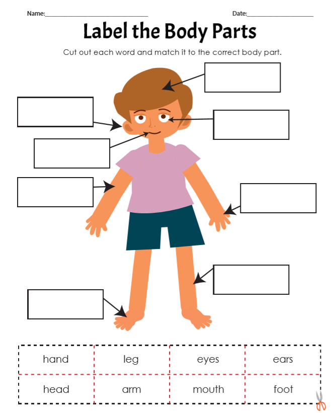 Label the Body Parts Worksheet