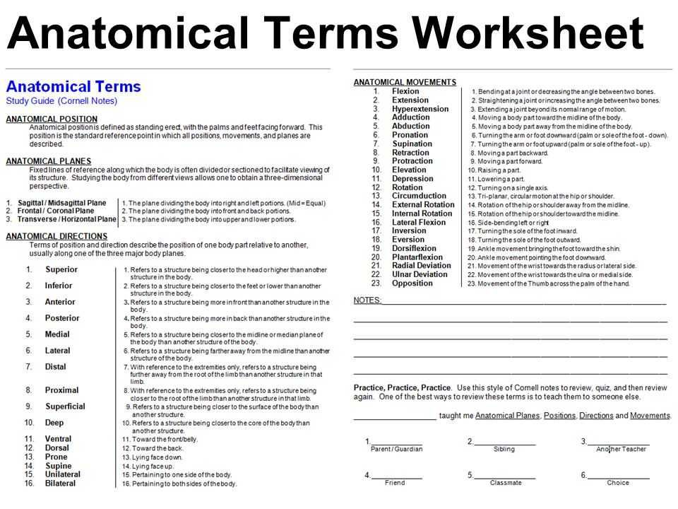 Anatomy and Physiology Worksheets High School Of Crash Course Psychology Worksheets