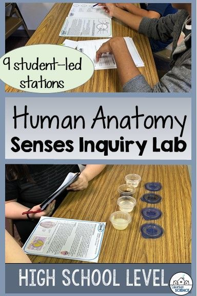 Anatomy and Physiology Worksheets High School Of Five Senses Lab Stations