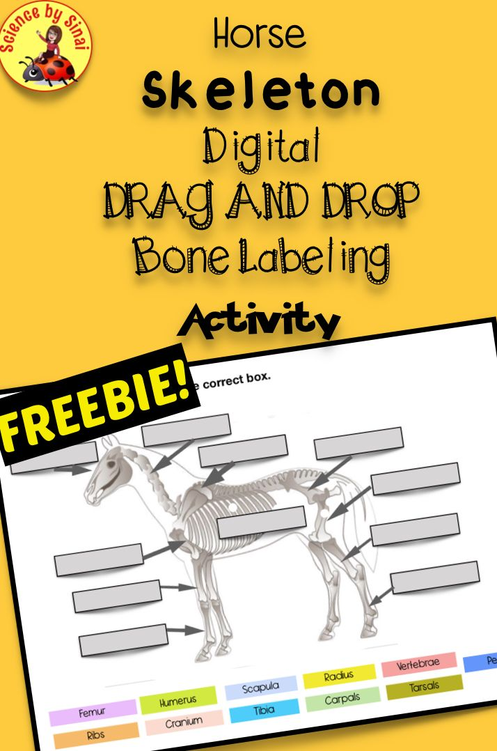 Comparative Anatomy Worksheets Of Interactive Digital ...