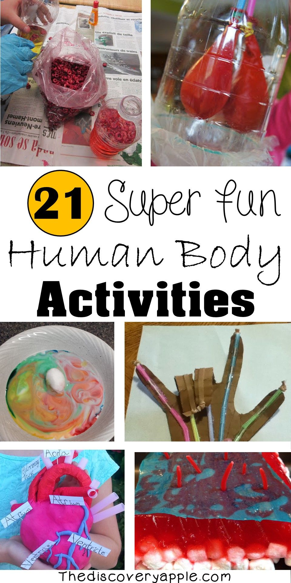Grade 5 Human Body Worksheets Of 21 Super Fun Human Body Activities and Experiments for Kids