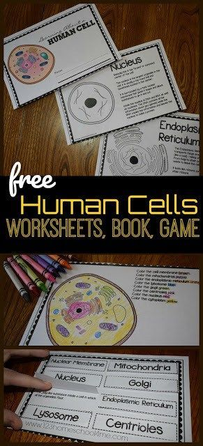 Grade 5 Human Body Worksheets Of Human Cells for Kids Reader Worksheets Games