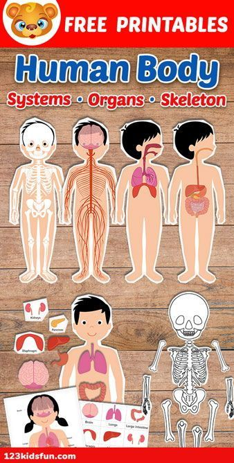 Human Body organs Worksheets Of Human Body Systems for Kids Free Printables Homeschooling