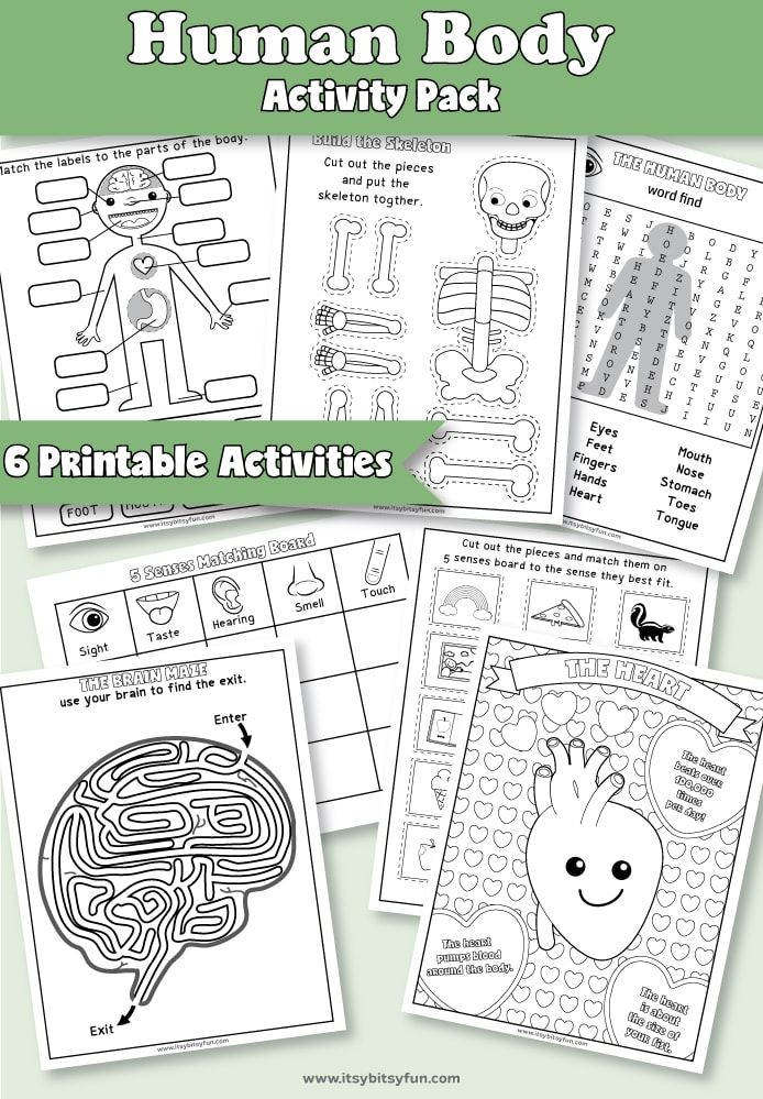 Human Body Parts Worksheets Of Human Body Worksheets Itsybitsyfun