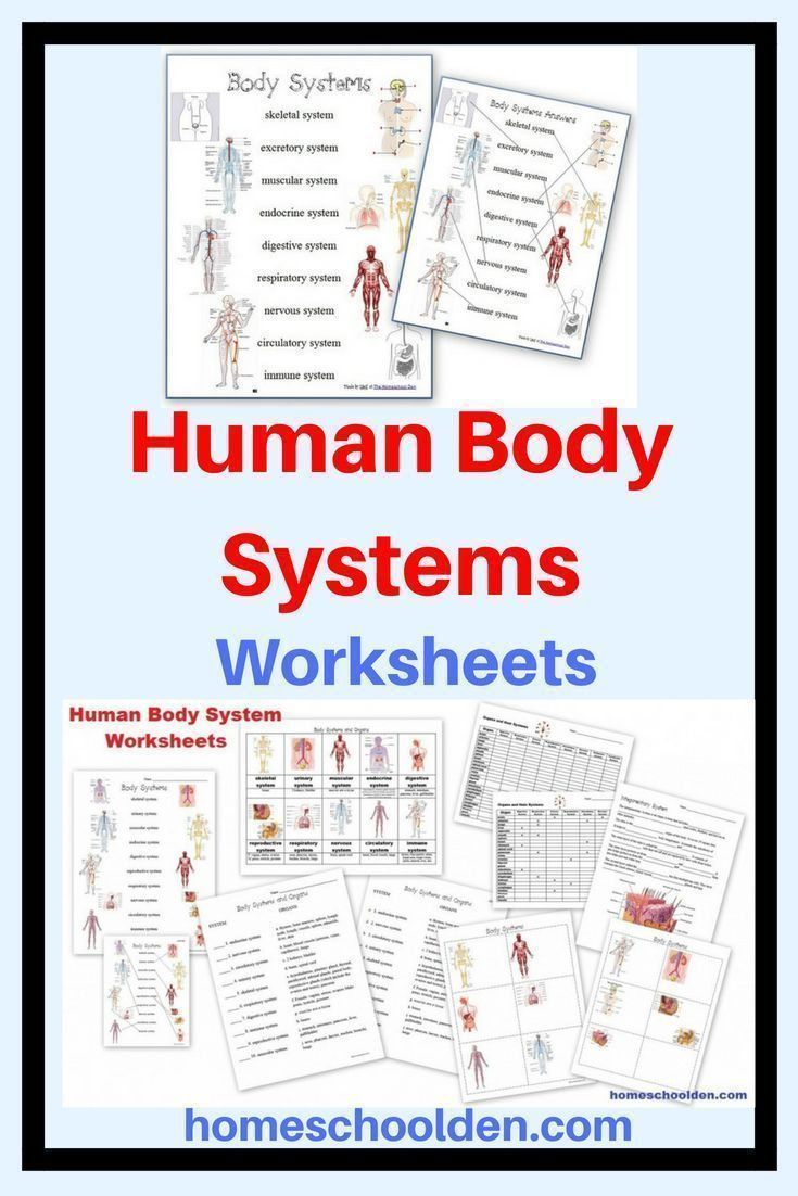 Human Body Systems Worksheets High School Free Of Notebook Pages