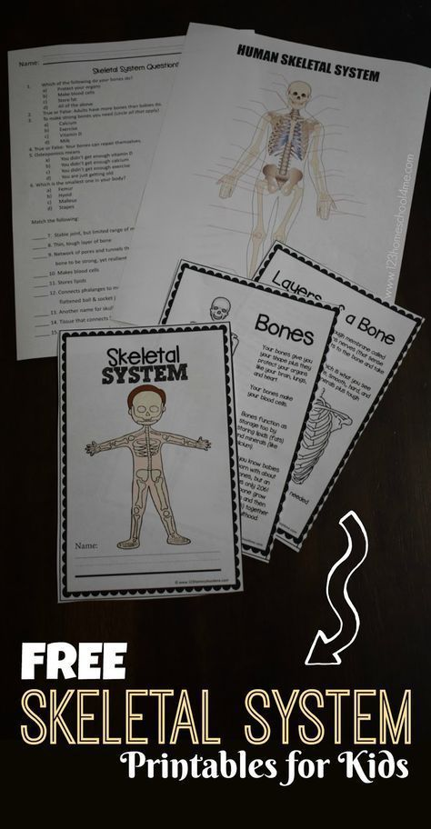 Human Body Systems Worksheets Middle School Of Free Skeletal System Worksheet S