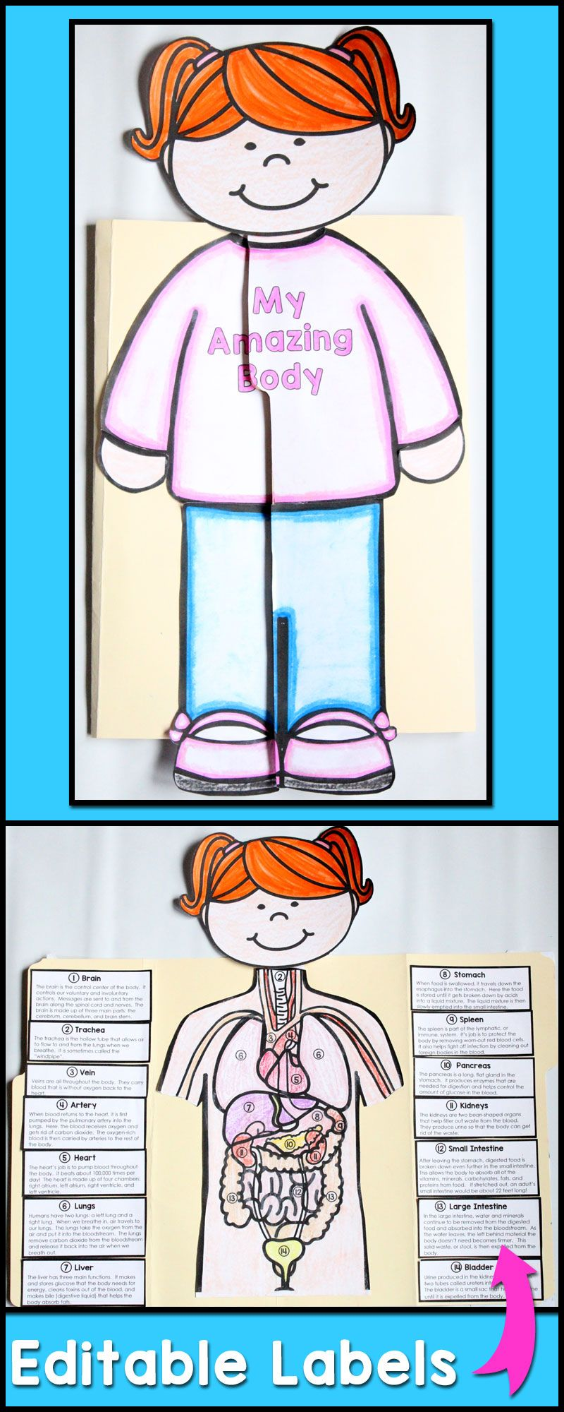 Human Body Worksheets 4th Grade Of Human Body Systems Project