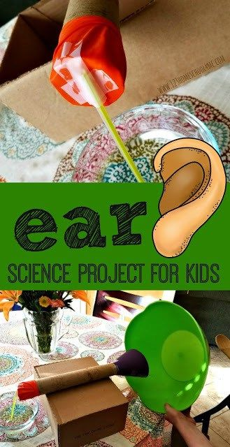 Human Body Worksheets for 6th Grade Of Ear Anatomy Science Project