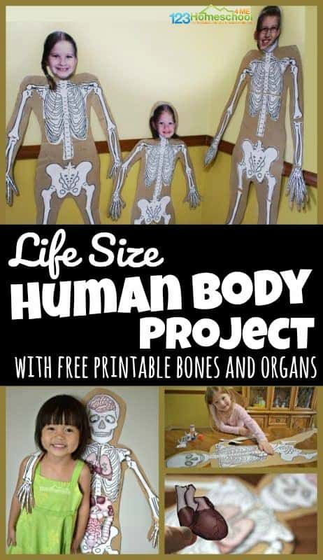 Human Body Worksheets for 6th Grade Of Human Body Project with Free Printables