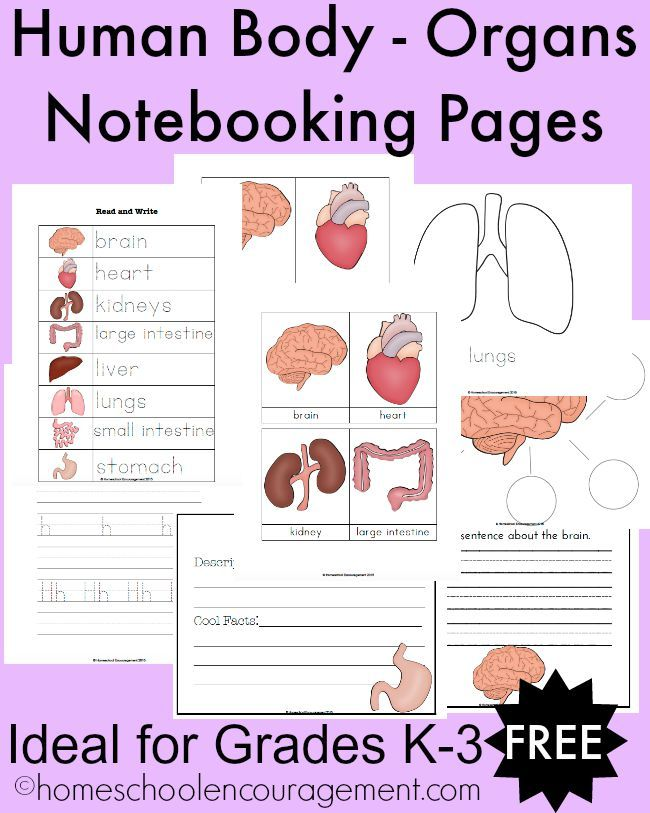 Worksheet On the Human Body Of Free Human Body organs Notebooking Pages for Grades K 3